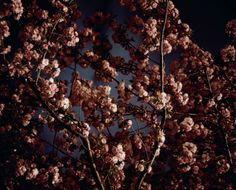 Night Flowers | GARETH McCONNELL