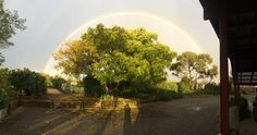 Gorgeous rainbow over the pool gardens at Mulberry Lodge, Willunga