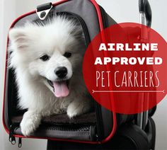 Want to bring your four-legged pal on your flight? No problem, but you'll need the right gear. Read our list of recommended airline approved pet carriers!