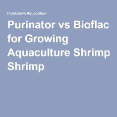 23 Best Biofloc Fish Tank images in 2019 | Fish Tank, Fish farming, Fish