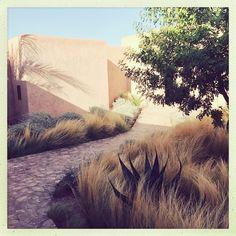 "736 Likes, 9 Comments - Berberlodge (@berberlodge_) on Instagram: ""#arnaudcasaus#lanscapedesign#paysagiste#"""