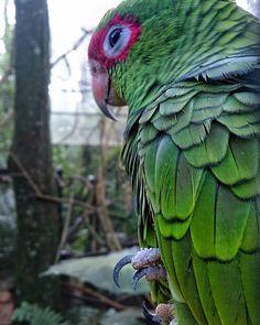 Parque das Aves / O contato com a natureza de perto. Esqueça a imagem de zoológico pois esse parque está muito além disso. O que impressiona no local é o contato próximo que voce tem com várias aves que ficam lá soltas e amigáveis. De tucanos a araras é tudo muito limpo organizado e informativo. Amei andar por aí na #ViagemSozinha por Foz. . #AosViajantes #viajarsozinha #lonellytravell . . .  Recomendo sempre o instagram que adoro: @umaturistanasnuvens .  Viajar sozinha e Foz do Iguaçu estão…