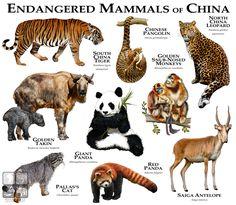 Endangered Mammals of China