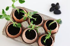 Make eggshell seedling pots to sprout your garden for less | Squawkfox