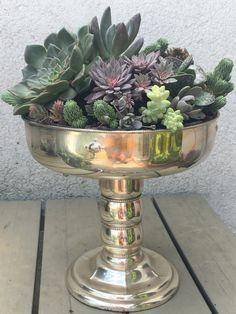 Succulent Arrangements, Succulents, Picture Design, Fountain, Outdoor Decor, Pictures, Home Decor, Art, Photos