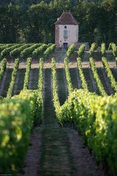 Vignoble de Cahors