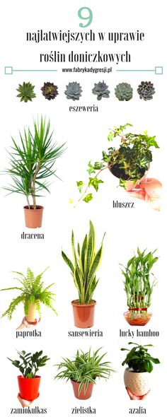 Perfect Wife, Balcony Garden, Go Green, House Plants, Planting Flowers, Flora, Home And Garden, Beauty Hacks, Ice Cream
