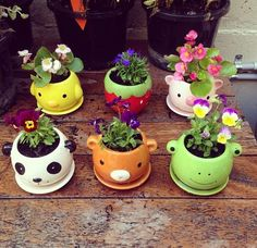 Create a indoor garden for mum this mother's day! Plant anything from herbs, flowers, succulents, veges and more! She'll love it an it's super super cute