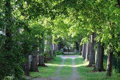 2012-05-19: secret avenue