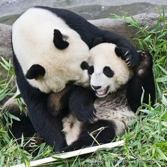 Bai Yun & Xiao Liwu
