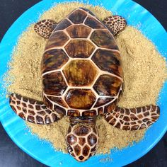 Russian Tortoise Diet Guide / Helpful Tips And Tricks Fondant Cakes, Cupcake Cakes, Reptile Party, Cake Models, Tortoise Care, Fun Deserts, Animal Cakes, Rum Cake, Turtle Birthday