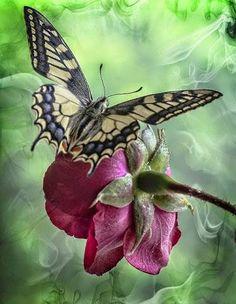 """""""Quando estamos tristes, fechamos os olhos para as coisas boas e abrimos as portas para situações que reforçam a tristeza. Que tal mudar a estratégia para ser feliz? Traga à memória o que gera alegria, felicidade, luz, sonhos, esperança. Quando sonhamos com algo melhor, investimos e não aceitamos a perda da FELICIDADE. """" Um Domingo abençoado para todos!"""