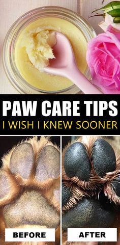 DIY Paw Care Tips For Dry & Cracked Dog Paws Dog paws go through a lot, and if they become dry and cracked, it can cause them a lot of pain. Here's a DIY Paw Balm Recipe You Can Make At Home to Care for your Dog's Dry Paw Pads Naturally. Dog Health Tips, Pet Health, Dog Paw Pads, Dry Dog Paws, Education Canine, Dog Care Tips, Pet Life, Homemade Dog, Dog Owners
