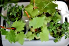 The Final Step for Your Home Grown Vegetable Seedlings