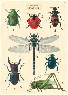 insect art - Cavallini & Co Natural History Insects Decorative Paper Sheet Poster Shop, Poster Prints, Art Prints, Art Et Nature, Nature Prints, Nature Study, Science Nature, Nature Illustration, Botanical Illustration