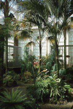 Palms inside the Ashton Memorial Butterfly House at Williamson Park, Lancaster City, England.