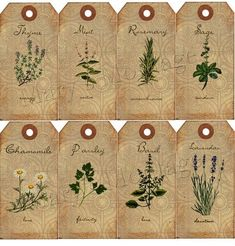 These sweet little tags can be used for scrapbooking, journaling, card making & gifts. Print & use as many times as you want. Vintage Tags, Vintage Labels, Printable Vintage, Vintage Paper, Free Printable, Herb Labels, Garden Labels, Spice Labels, Plant Labels