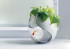 One Pot, Two Lives - a fish tank merged with a potted plant. The fish's waste provides nutrients for the plant, and the water given to the plant gets filtered for the fish.
