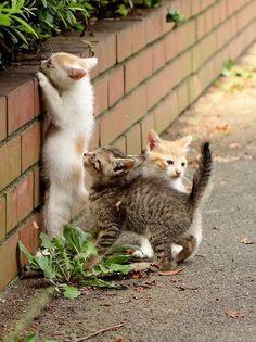 kitten fever.....