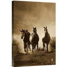 East Urban Home Oregon 'Horse Group of Four Approaching Camera' Photographic Print on Wrapped Canvas Size: