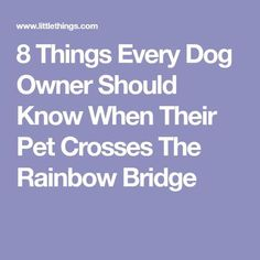 8 Things Every Dog Owner Should Know When Their Pet Crosses The Rainbow Bridge