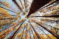 Keep Looking Up! | Aiken, South Carolina