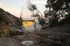 The wines of the Cinque Terre, a dry white wine and a sweet wine, the sciacchetrà, were known already in the Roman Empire. Until these days the viticulture has to be done by hand.   Some courageous winemakers as Elio Altare and Antonio Bonanni rediscovered the great potential of this terroir.