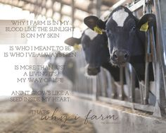 Why I Farm… Farmgirl Photography - Modern Farm Girl Quotes, Farmer Quotes, Cow Quotes, Country Girl Life, Country Girls, Country Living, Cattle Farming, Livestock, Agriculture Quotes