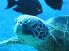 Sea Turtle   Flickr - Photo Sharing!