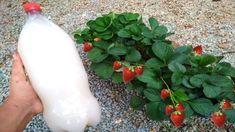 Herb Garden, Compost, Beautiful Gardens, Aloe Vera, Flora, The Creator, Herbs, Fruit, Plants