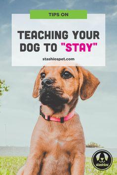 Dog Training Near Me, Dog Training Treats, Training Your Puppy, Brain Training, Dog Training Techniques, Dog Training Videos, Bathing A Puppy, Puppy Socialization, Dog Commands