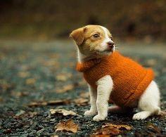 awwww #puppies