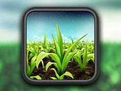 FieldView App Icon