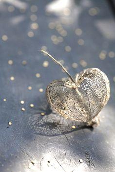 amour en cage doré