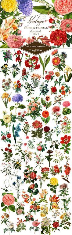Vintage Rose & Floral Botanicals 3 by Eclectic Anthology on @creativemarket