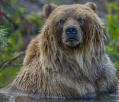 The Bathing Bare Bear Photo by Doug S. — National Geographic Your Shot