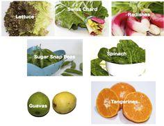 lettuce, Swiss chard, radishes, peas, spinach, guavas, tangerines