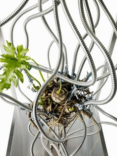 Botanical Sculpture #5 GOD by Azuma Makoto