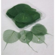 Dark Green Coloured Skeleton Leaves -   Natural Floral Supplies - Skeleton Leaf These amazing detailed detailed skeleton make wonderful craft materials.  They are light and delicate and can be used in an array of ways.  Let you're creative imagination run wild with thsee esquisite leaves.  We also offer these skeleton leaves in a  wide range of colours:  Gold, Silver, Fuschia, Aqua Marine, Apple Green, Pink, Lilac, Blue, Bordeaux, Black, Red, Orange and Yellow.   For more craft supplies…
