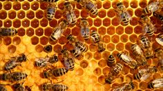What Is It About Bees And Hexagons?