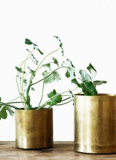 brass planters LOVE this! Brass and green? Potted Plants, Indoor Plants, Plant Pots, Herb Pots, Green Plants, Indoor Garden, Home And Garden, Indoor Outdoor, Magic Garden