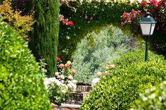 más de 250 especies de flores y árboles confieren a toda la finca una luz y un color diferente en cada época del año.
