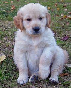 Cute puppy and dog - http://www.1pic4u.com/blog/2014/10/26/suesse-hundebabys-87/