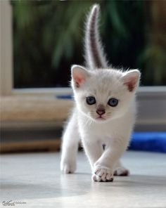 This looks like the sweet little kitty my hubby found and brought home one day!  What a little sweetie!