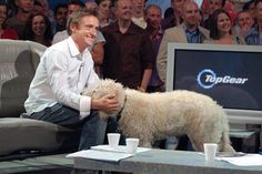 TeeGee! widely considered the top gear dog actually belongs to Hammond and his family.