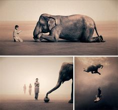 elefante-colbert
