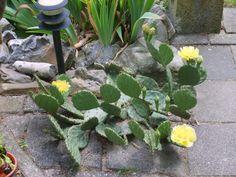 succulenten verzorgen - Google zoeken