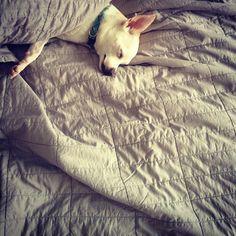 sleep tight photo by @Jonathan Lo / happymundane on Instagram