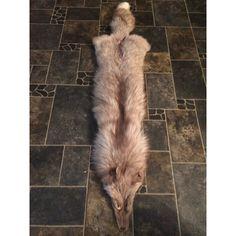 wolf pelt - Google Search