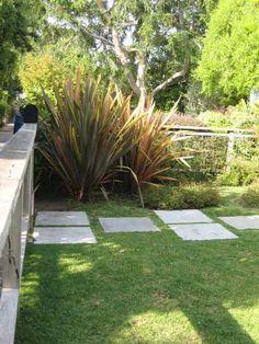 drought tolerent plants | Drought Tolerant Plant: Flax | Apartment Therapy